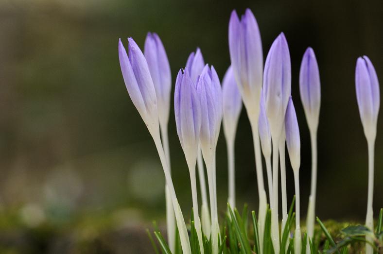 bloem1