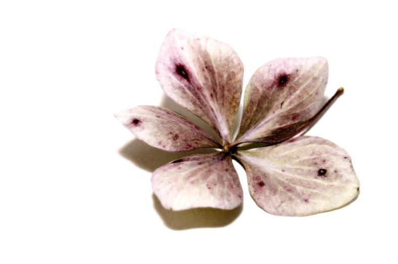 bloem15
