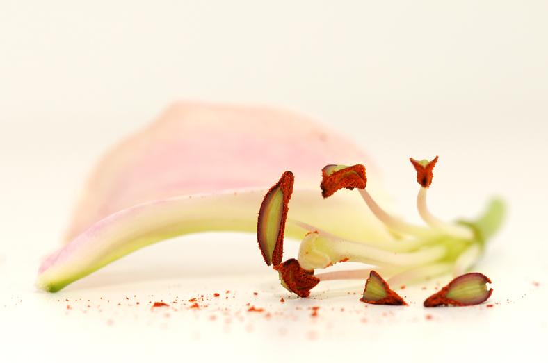 bloem16