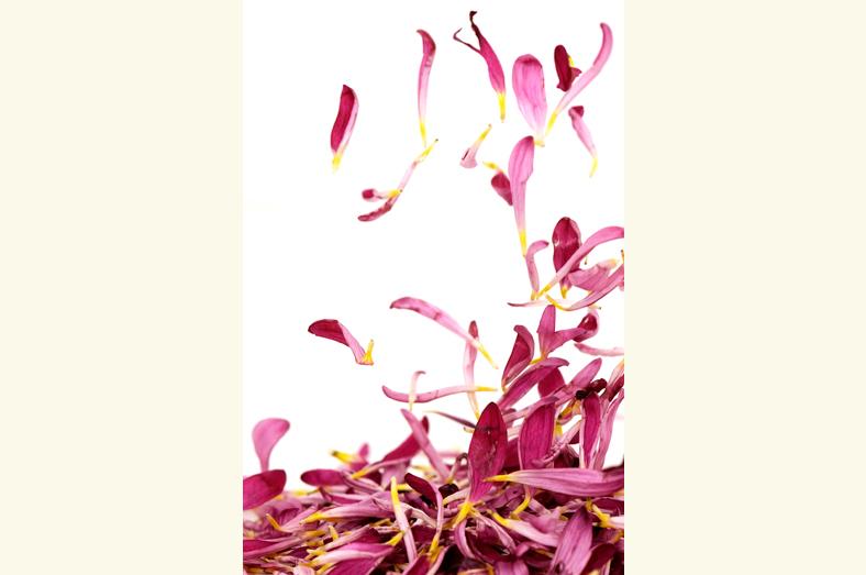 bloem17