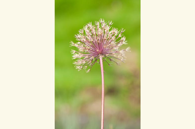 bloem20