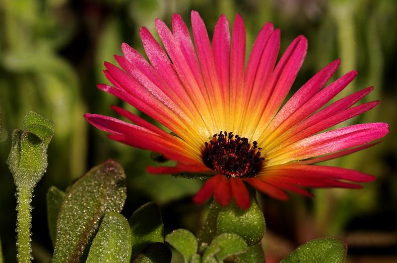 bloem5
