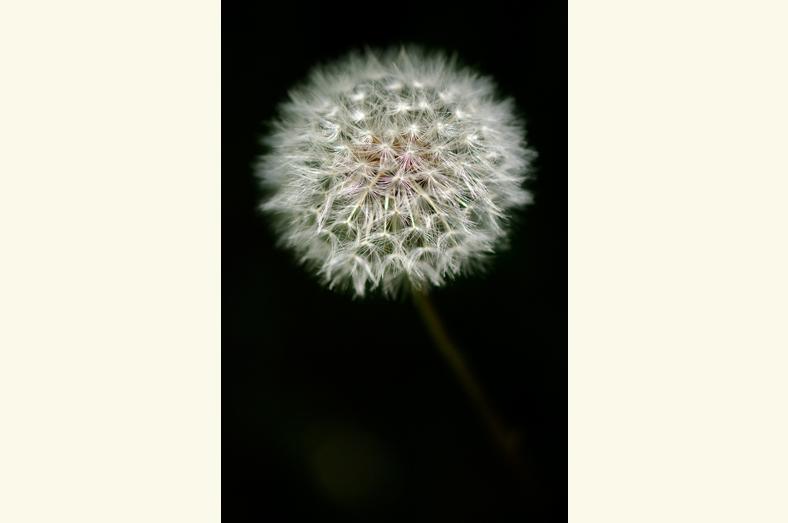 bloem6